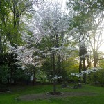 The area is known for its Dogwood trees